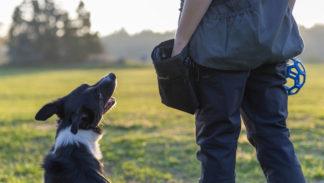 Dog sport - kynologie